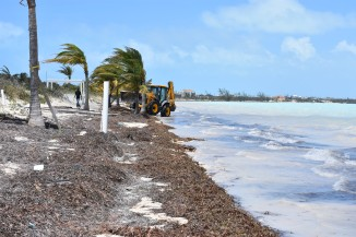 A tractor had already been sent out to clear the massive amounts of seaweed from the beach